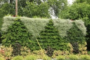 Tree Patterned Green Wall Planting