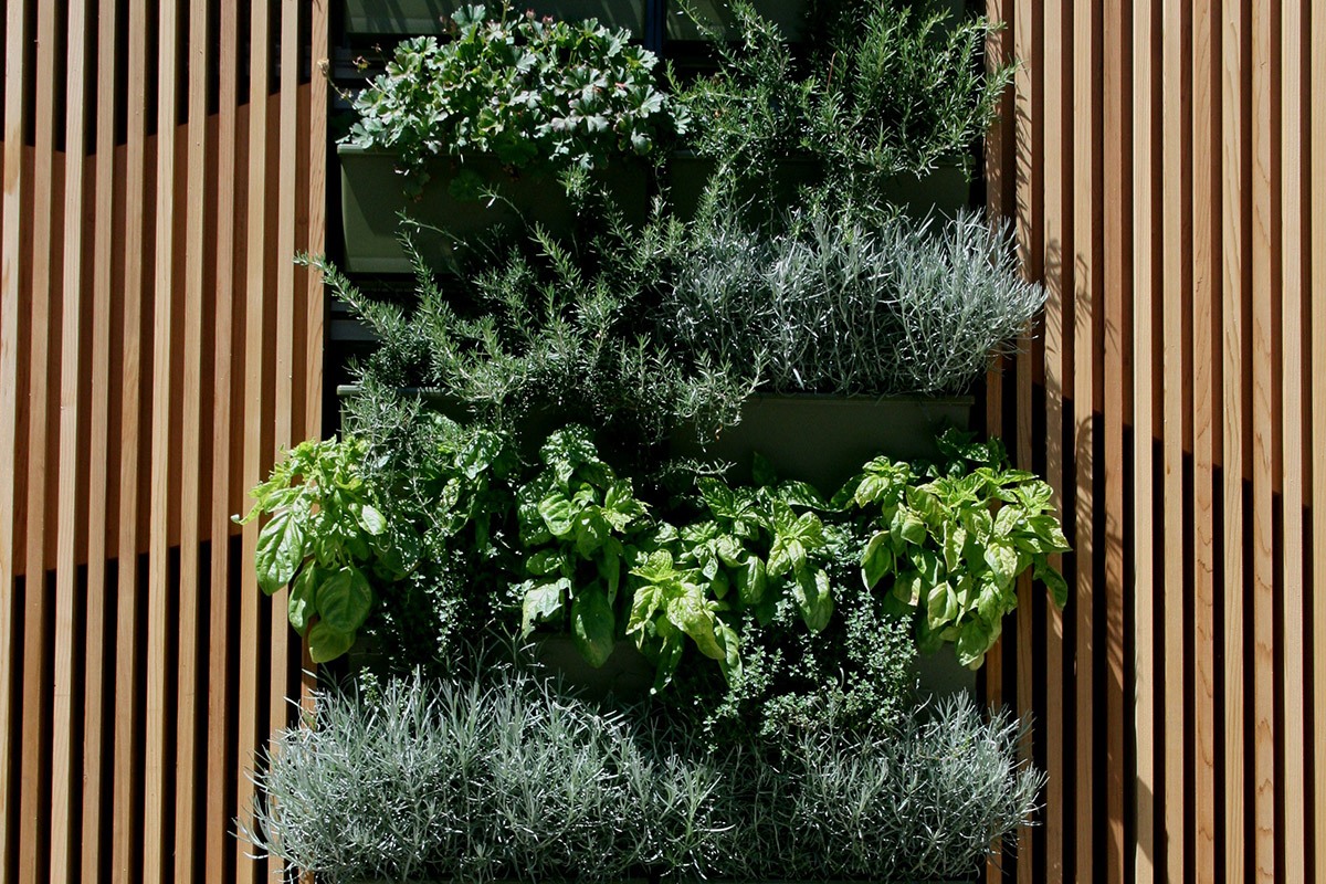 Nature is introduced by including a green wall in the student area.