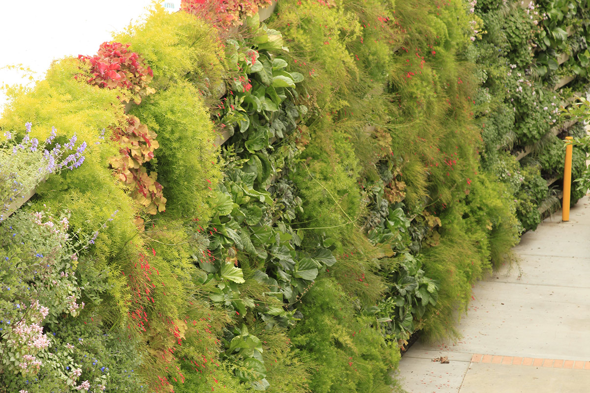 A green wall was installed to bring healing to veterans.