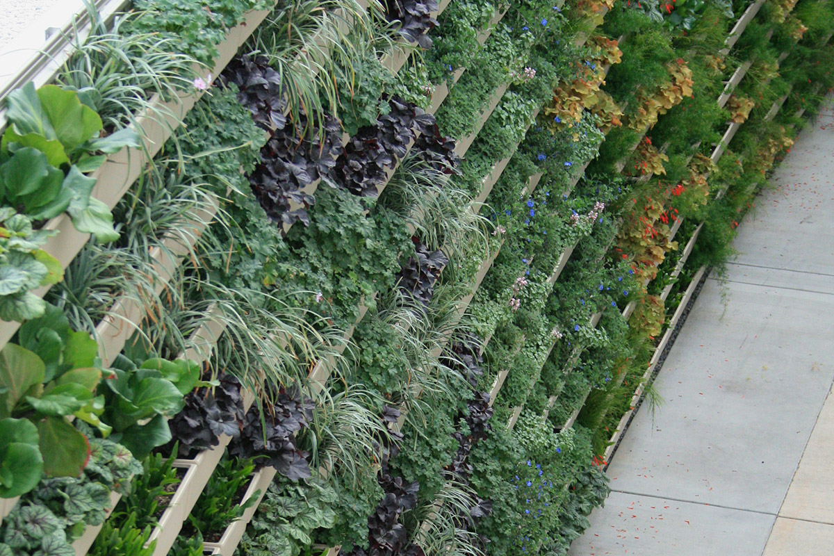 A variety of plants were selected for the medical center's green wall.