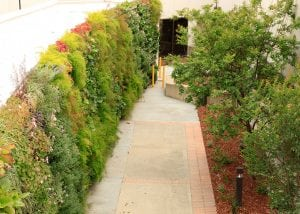 VA hospitals introduces a green wall to bring natural views.