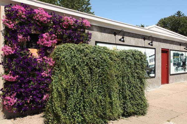 Wasserman's floral blooming green wall.