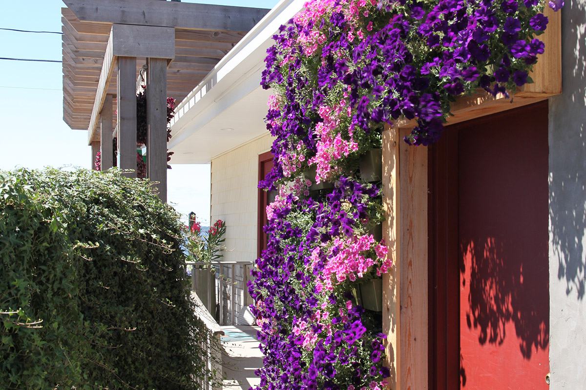 Pink and purple annuals are featured in a living wall at Wasserman's.