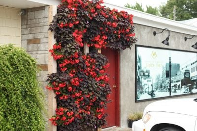 Wasserman's Floral in Muskegon, Michigan, greets visitors with a green, living wall.
