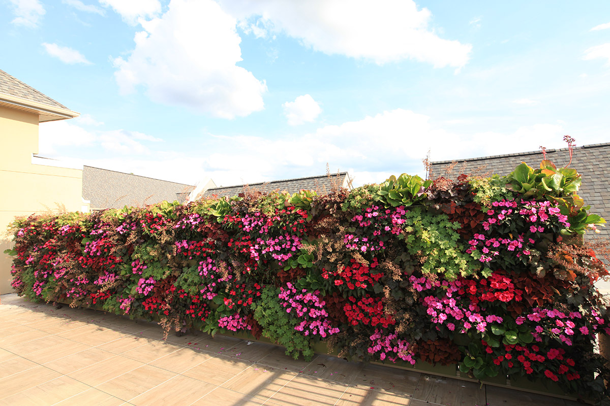 Lots of color was added to a senior living community with a living wall.
