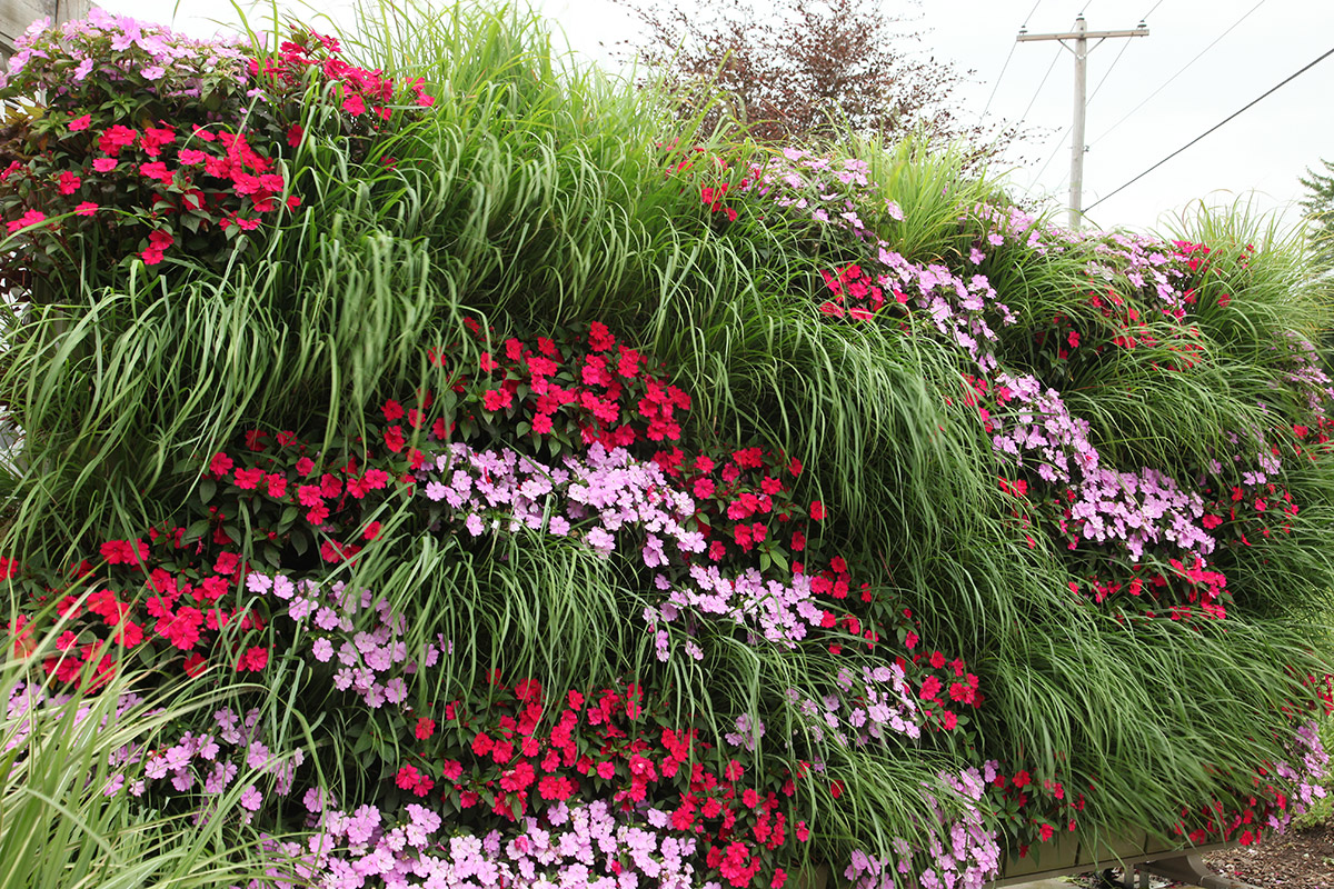 Naturally beautify a space with LiveWall vertical gardens.