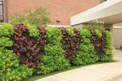 A LiveWall in front of the Spectrum Health Medical Group Heart and Vascular Center in Grand Rapids, MI.