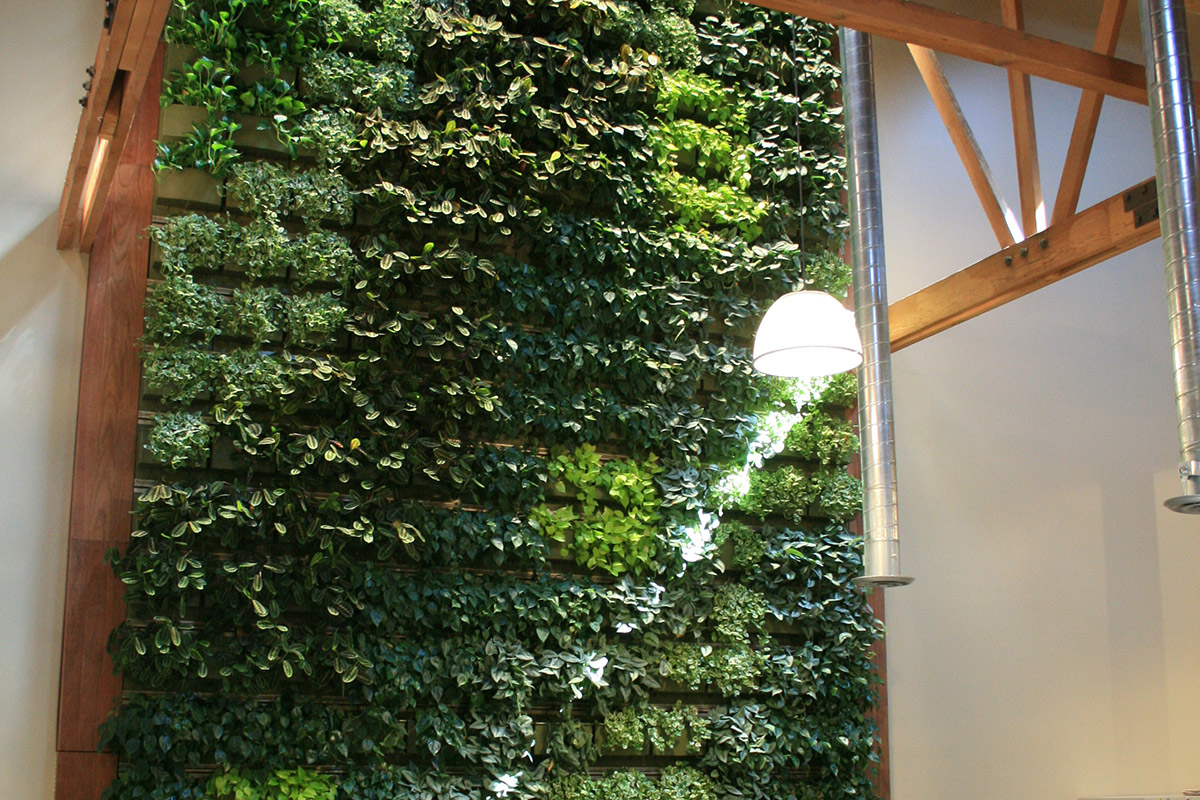 Living walls can be used in offices to promote productivity.