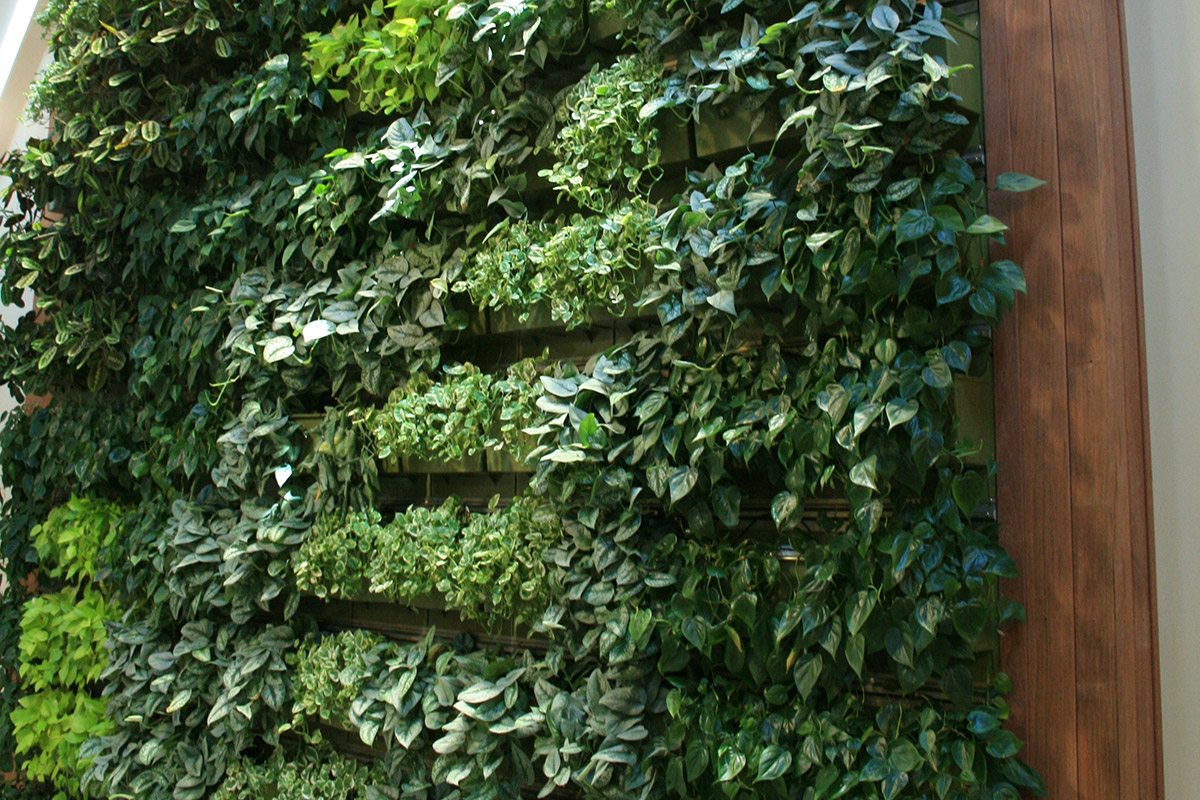 Closeup of the living wall in Willow Street Realty.