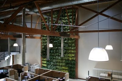 A view of the Willow Street Realty office and their 480 square foot LiveWall green living wall that stretches from floor to ceiling.