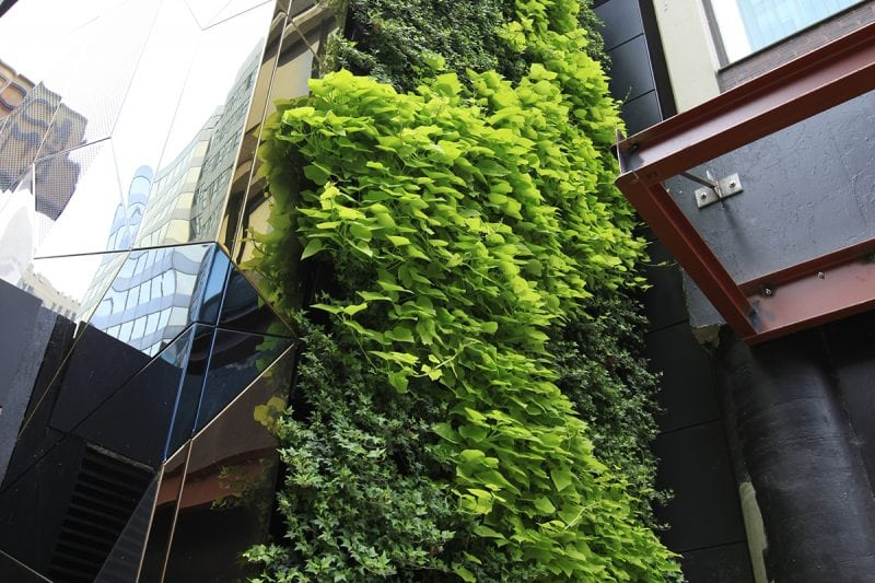 Outdoor green wall systems by LiveWall.