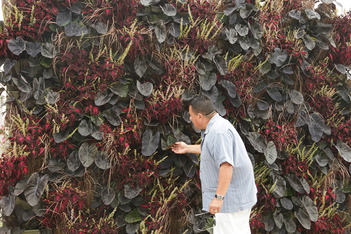Colocasia, Coleus and Sedge in LiveWall brand Living Wall.