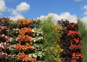 Colorful Striped Annual Plantings against Blue Sky.