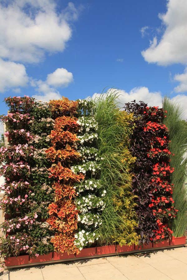 Colorful annual green wall planting.