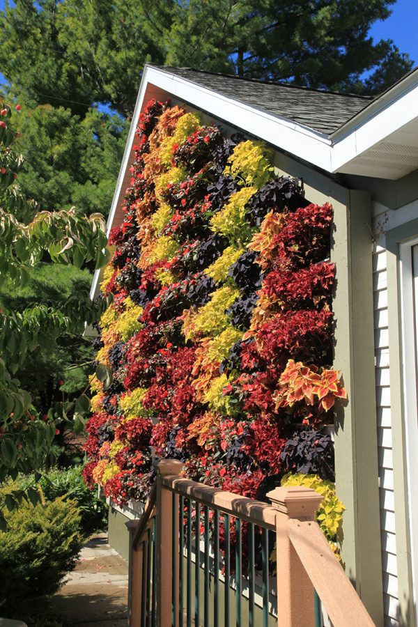 Home with outdoor green wall planted in fall colors.