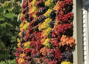 Residential garage wall planters featuring brightly colored coleus selections.