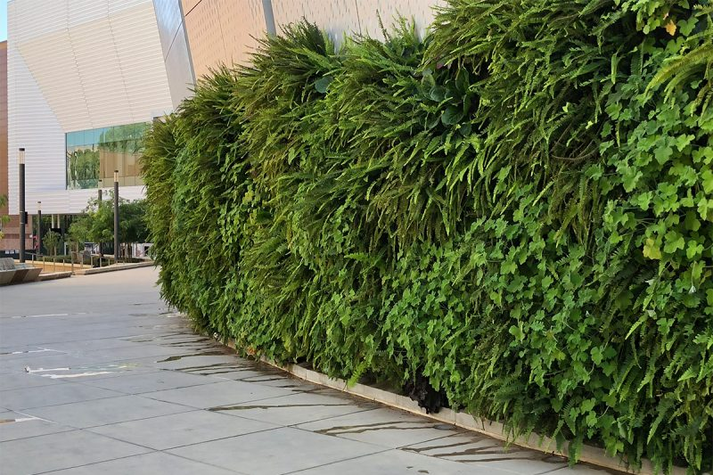 Browse Outdoor Green Wall Projects