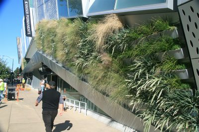 Green and yellow grasses planted in a LiveWall line the outside of the Golden 1 arena.