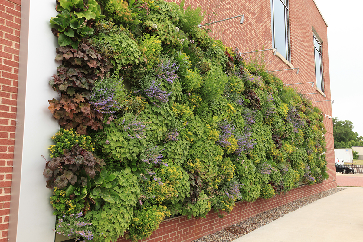 Late summer coloring of perennial living wall at the Grand Rapids Downtown Market.