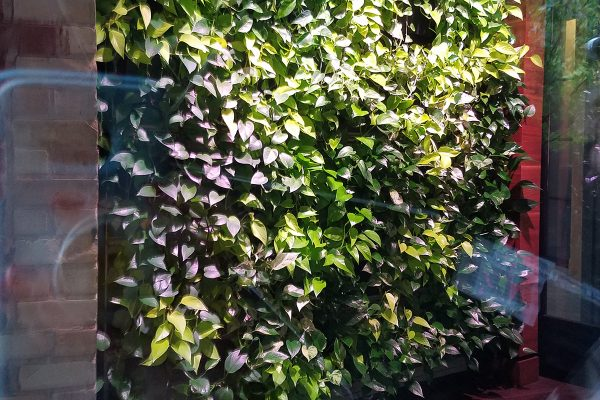 Indoor living wall at Green Leaf Trust, photographed through window.