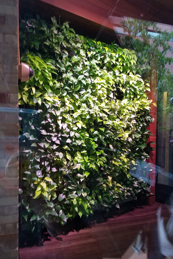 Indoor green wall at Green Leaf Trust, photographed through window.
