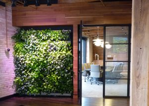 Indoor green wall planted with pothos and lit with blue/red diode LED grow lights.