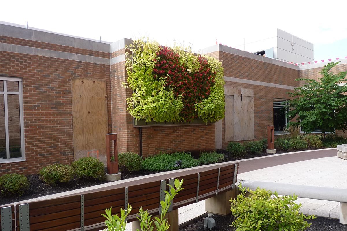Patterned green wall planting at Hendricks Regional Health Care Healing Garden.