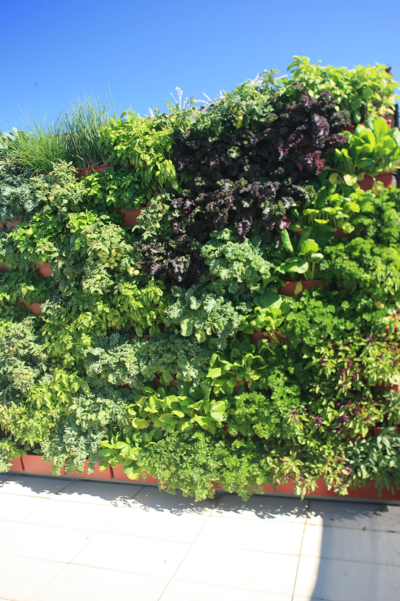 Herbs, leafy greens and tomatoes in vertical garden.