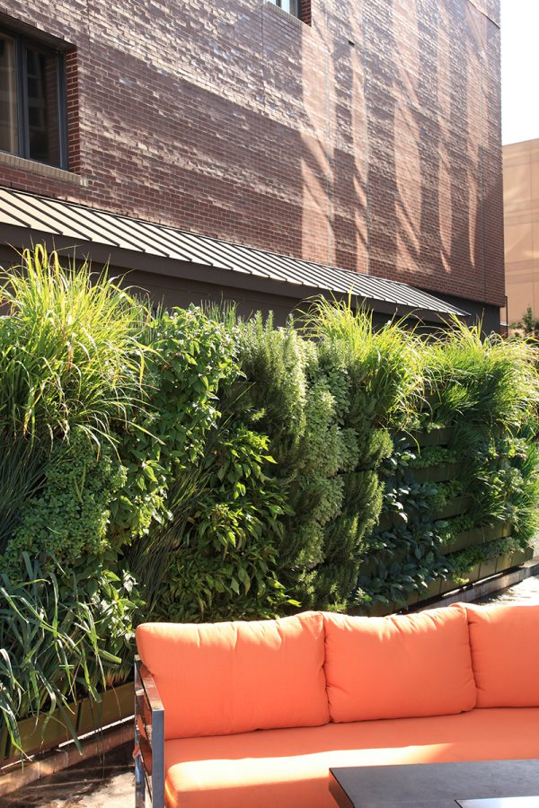 A living wall provides fresh produce and privacy for the restaurant at JW Marriott in Grand Rapids.