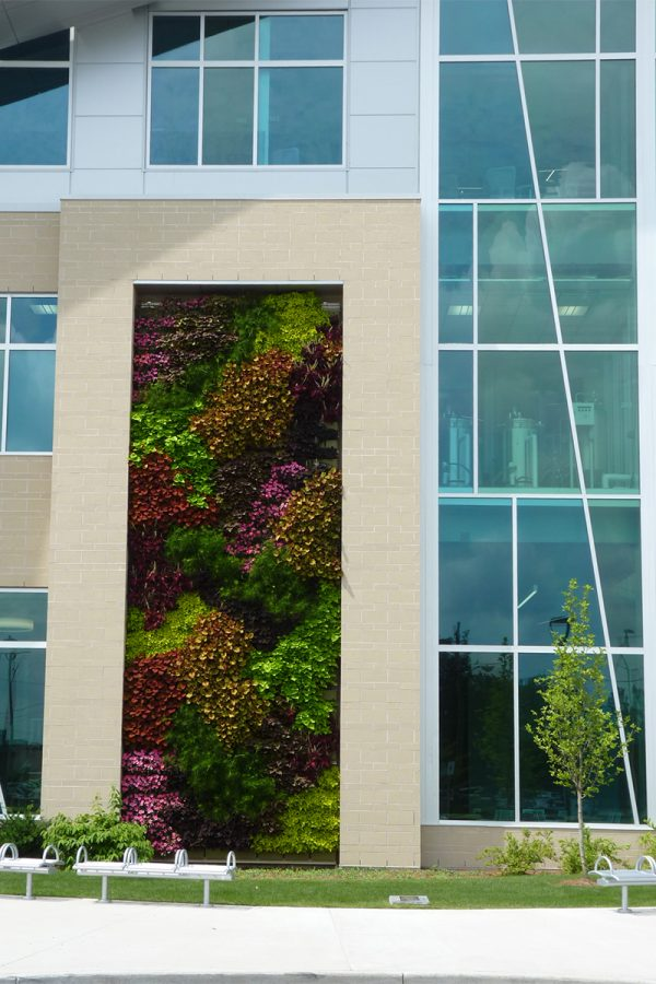 Thirty foot tall green wall at Kalamazoo Valley Community College.