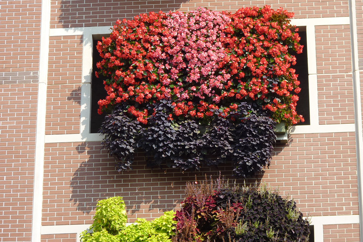 Living wall installation in window of Monroe County operated parking garage in Bloomington, Indiana.