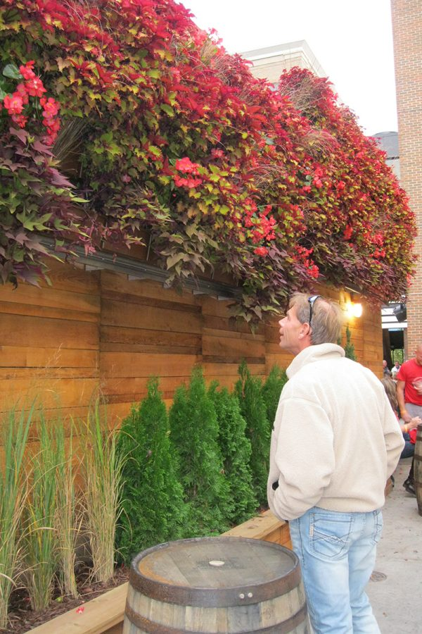 The Knickerbocker, New Holland Brewery's Grand Rapids pub, has brightly colored annual plants in green walls in their beer garden.