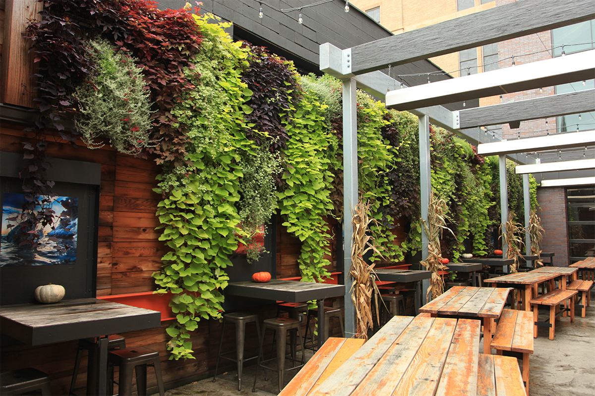Sweet potato vines cascade dramatically from green walls at the Knickerbocker, New Holland Brewing's location in Grand Rapids.