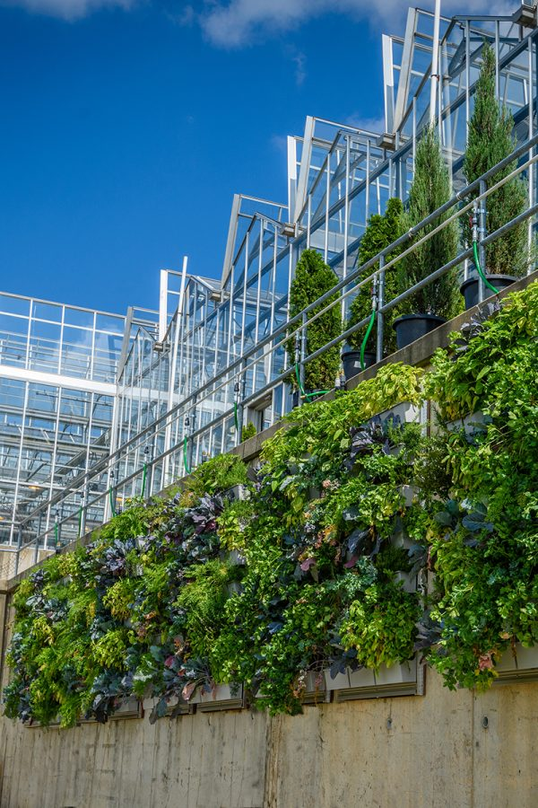 Vertical gardens grow produce at Phipps Conservatory.