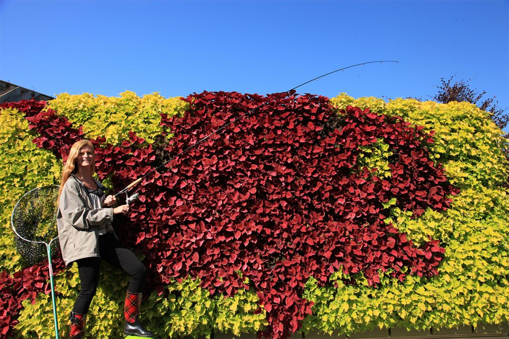 """Red Snapper"" Illustrative Green Wall Planting"