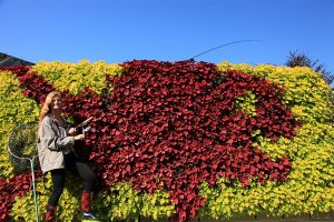"""""""Red Snapper"""" Illustrative Green Wall Planting"""