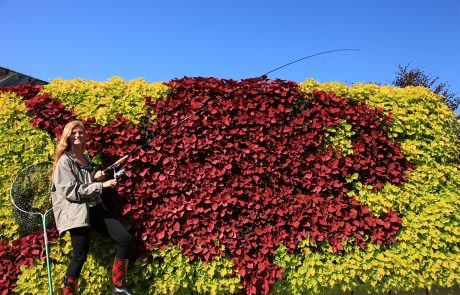This green wall was planted with coleus in a pattern to mimic a red snapper fish.