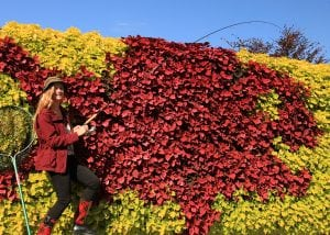 Living Wall planted in pattern of a red snapper fish, using coleus cultivars in contracting colors.