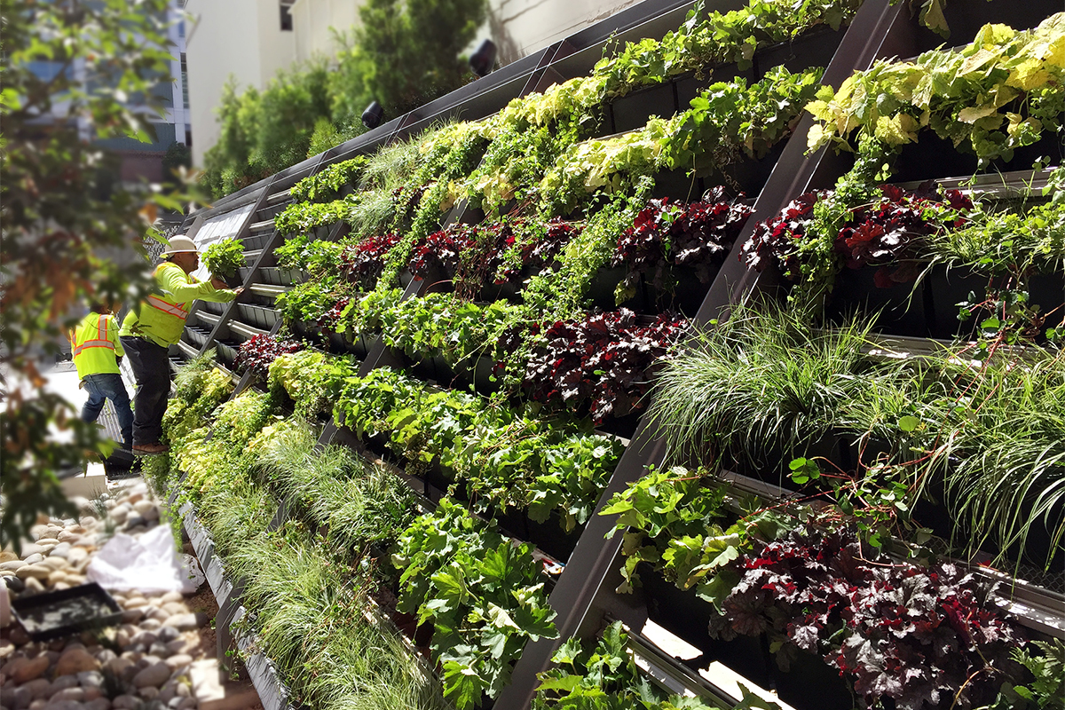 Landscapers place living wall plants in this San Diego green wall.