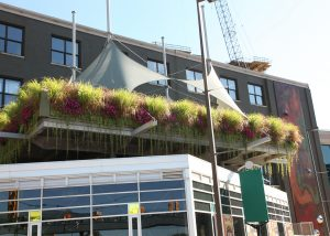 Green walls surround the sky deck at Bobarino's restaurant at The B.O.B.