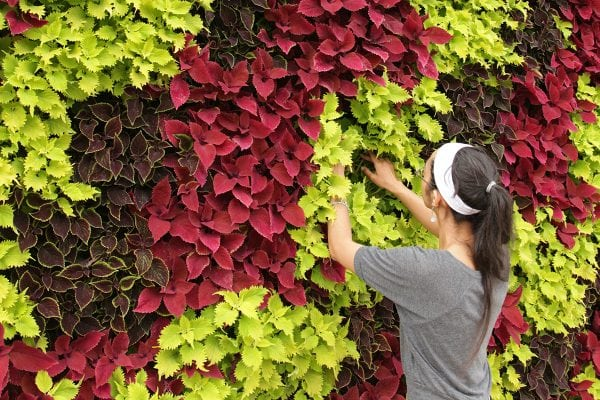 Frequently asked questions about green wall maintenance.
