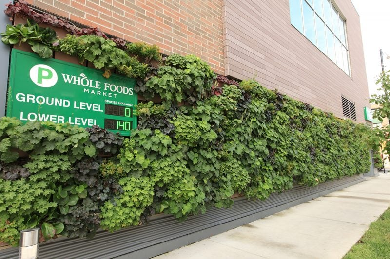 Whole Foods Market's living wall complements both the new landscaping added outside the store as well as the existing landscape of the neighboring area
