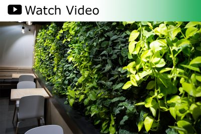 Indoor living wall at Coava Coffee in Portland, Image by Acheff Images