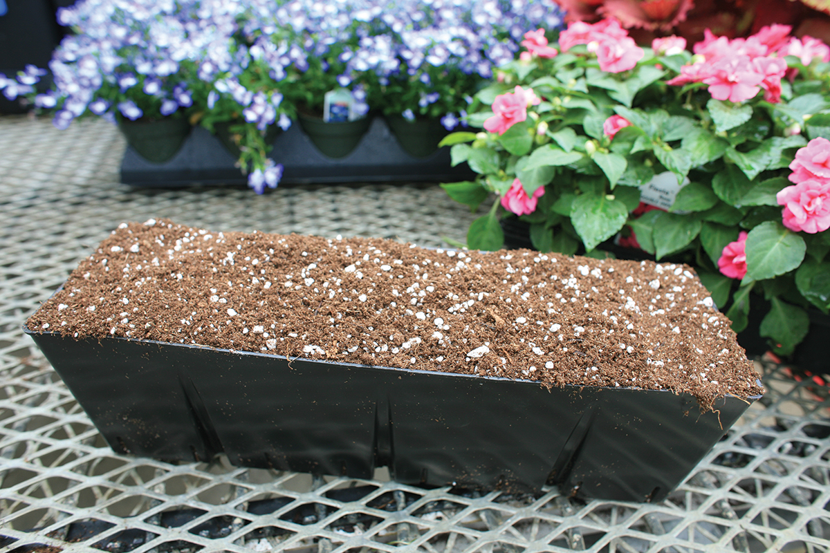 Annual plants require a good potting soil mix.