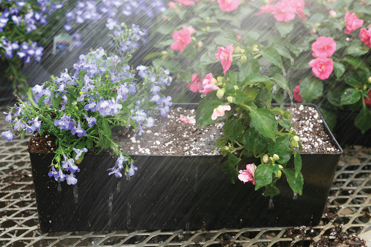 Gently water in the fertilizer and new plants with a mist setting on hose.