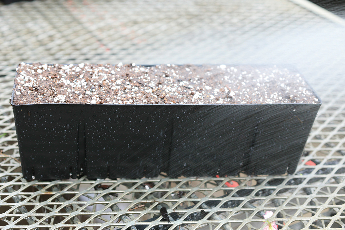 Gently water in seeded planter inserts.