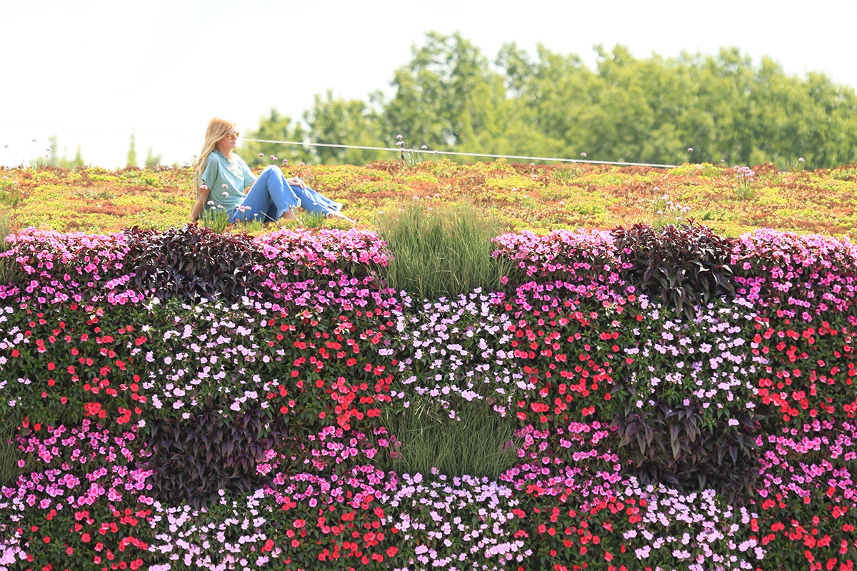 LiveWall was developed by the inventors of LiveRoof brand green roofs.