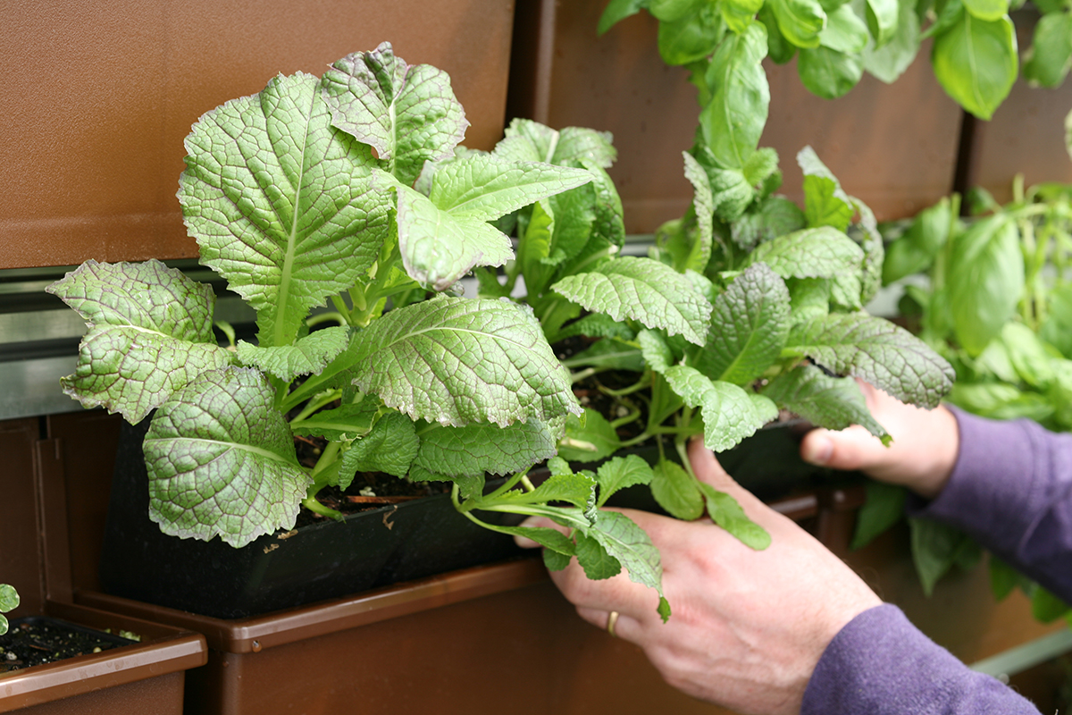Most herbs and vegetables have a limited lifecycle, so swapping them at the onset of each growing season should be easy.