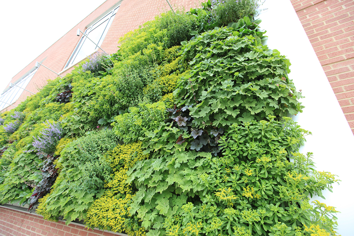 Green wall planted with cold-hardy perennials.