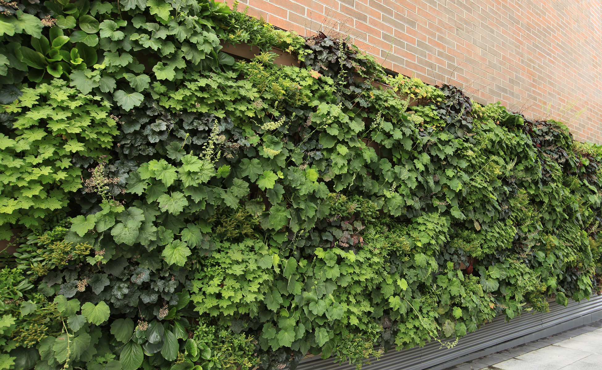 LiveWall provides outdoor green wall systems for virtually any climate.